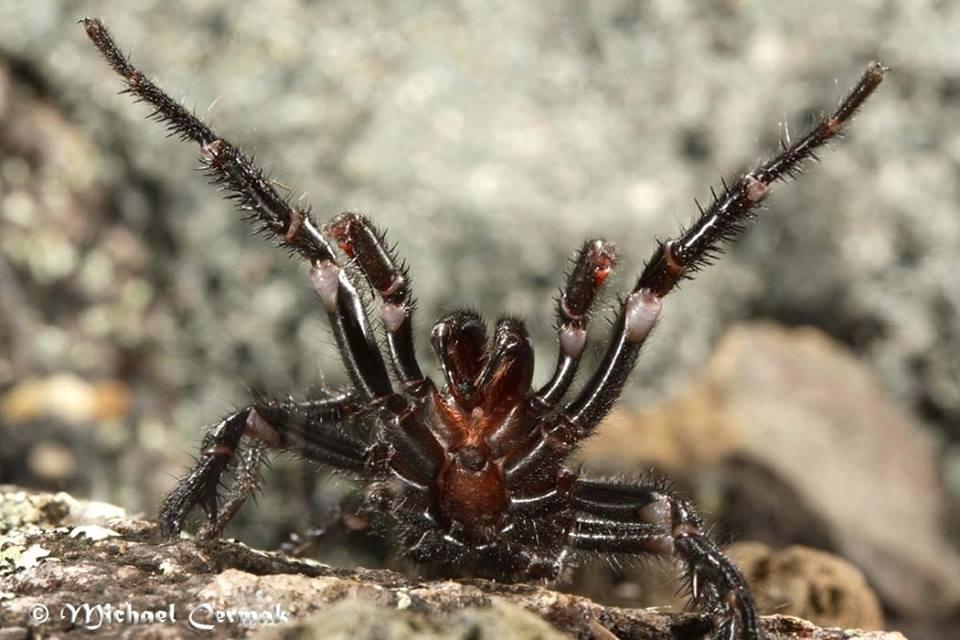 Jaká jsou nebezpečná zvířata v Austrálii? 10 nejnebezpečnějších……